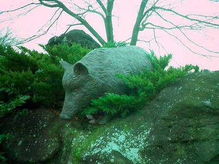 04猪.JPG