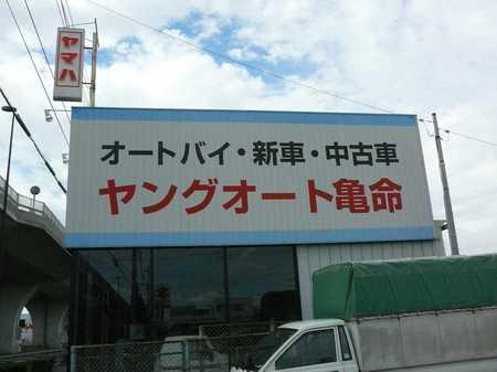 03_ヤング.jpg